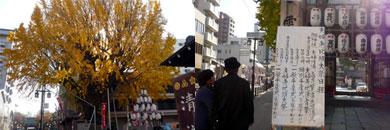 櫛田神社の銀杏と夫婦恵比須大祭の準備